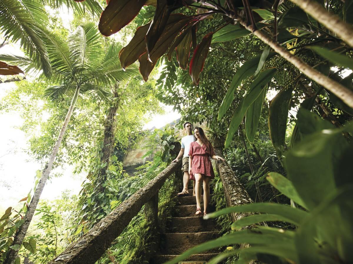 Paradise Links Port Douglas Gallery Image of Rainforest