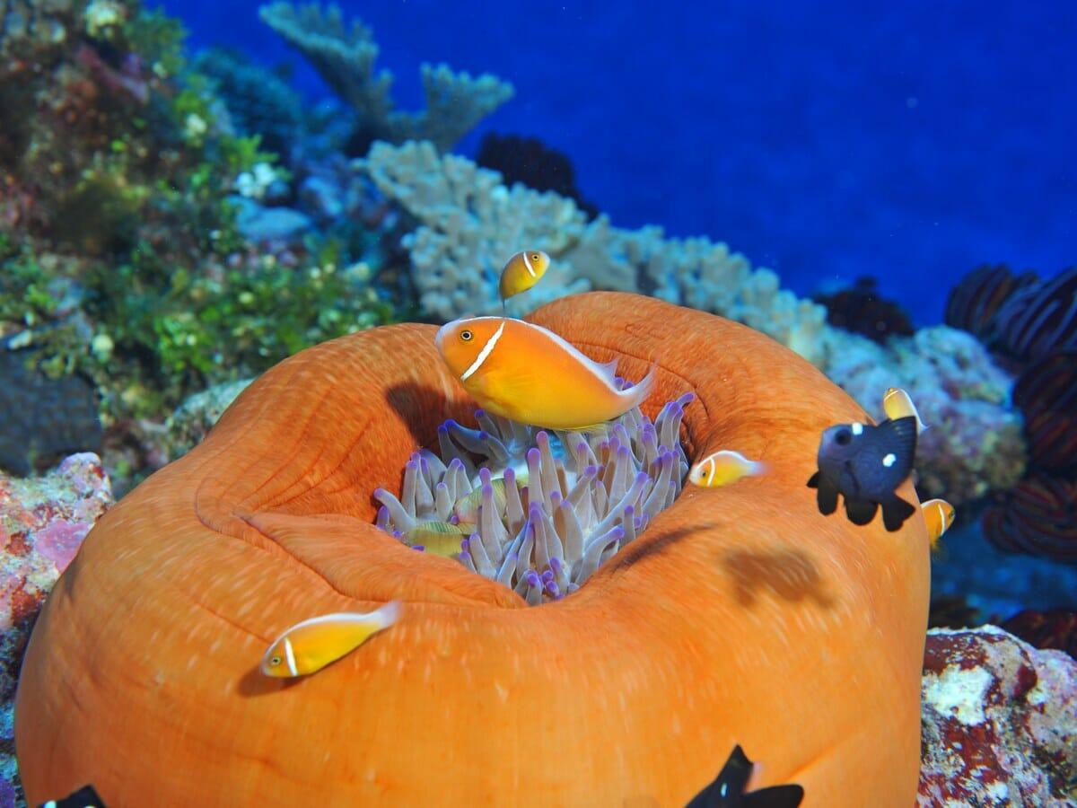 Sheraton New Caledonia Deva Spa & Golf Resort Gallery Image of Reef
