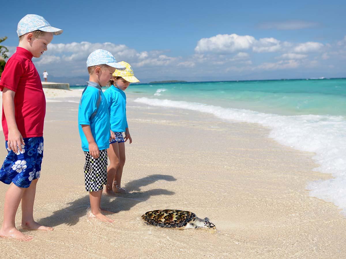 Treasure-Island-Resort-Fiji-turtle