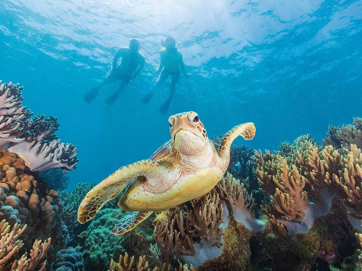 Whitsundays-snorkel