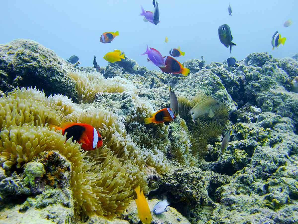Barrier-Beach-Resort-Santo-underwater