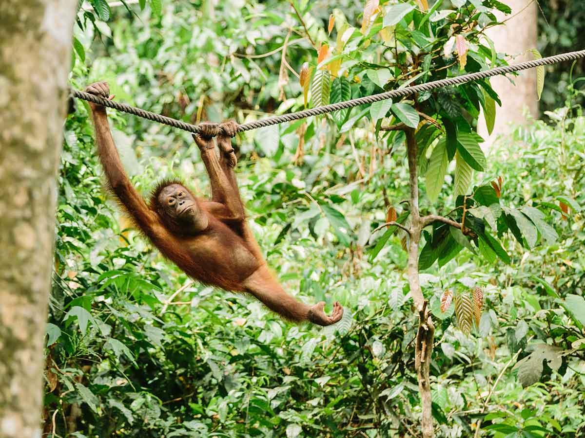 borneo-orangutan-sanctuary