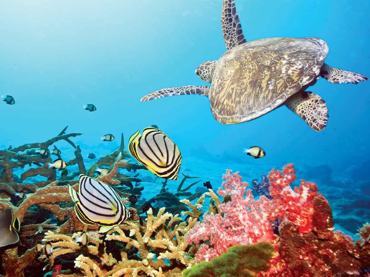 borneo-underwater