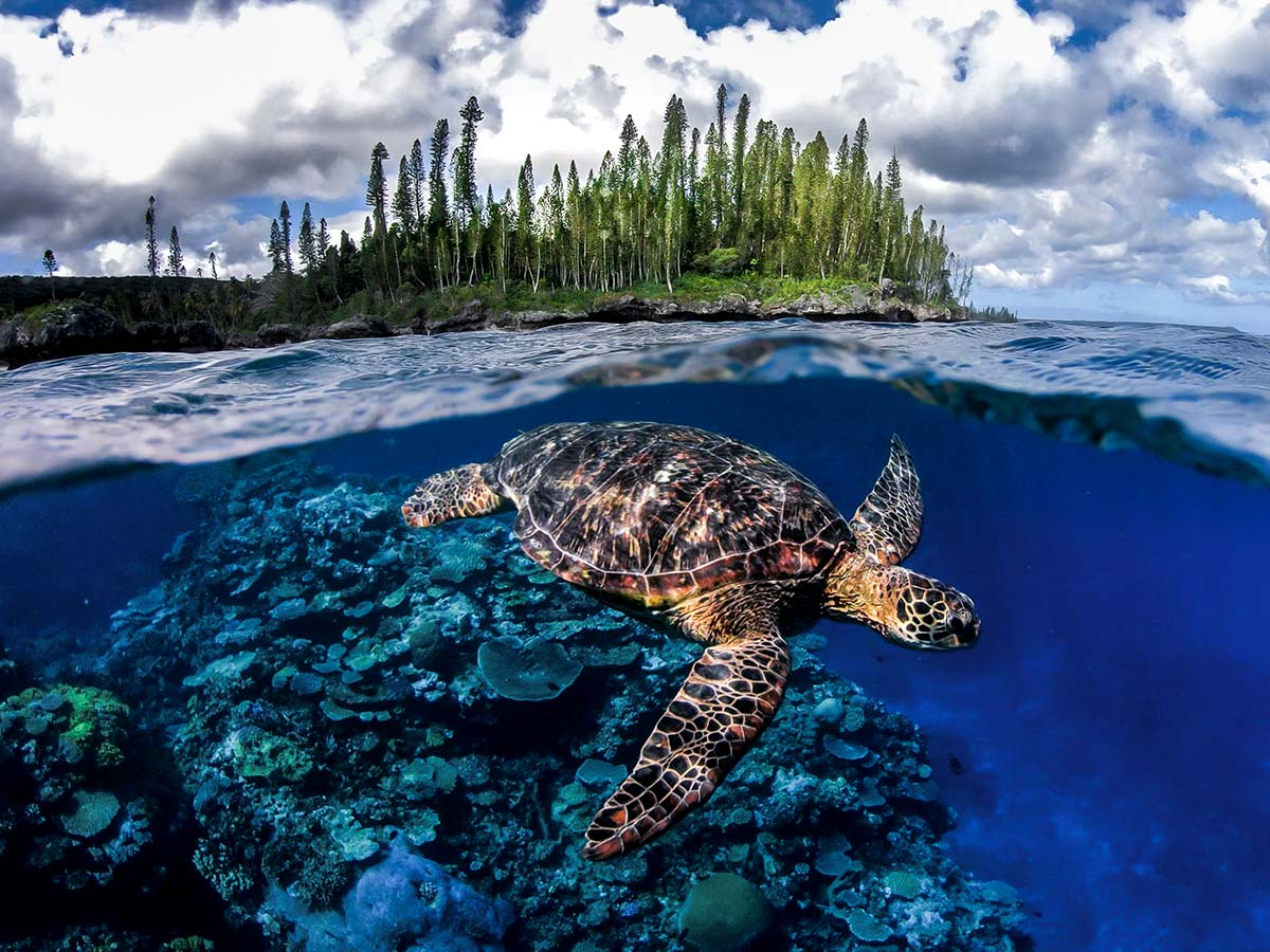 belle-tortue-respire new caledonia