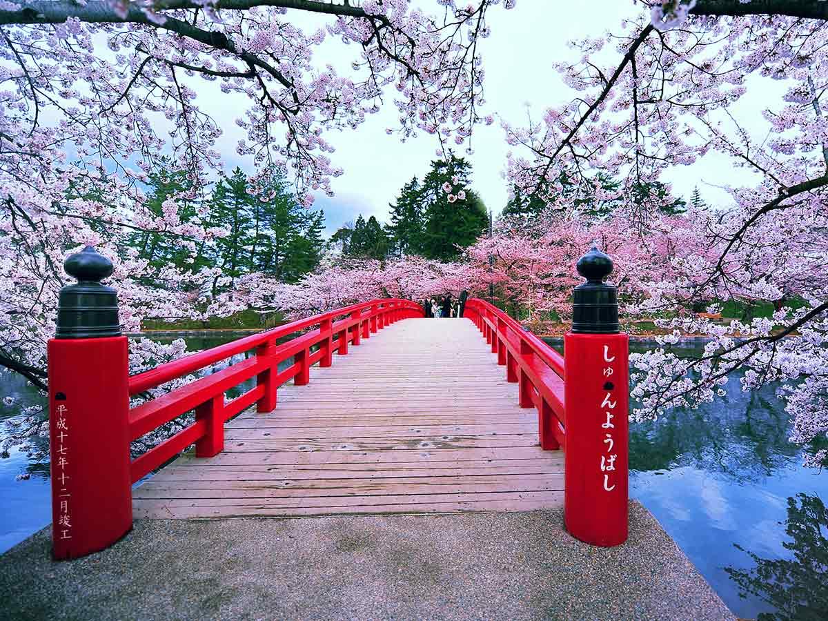 tokyo-cherry-blossom-japan