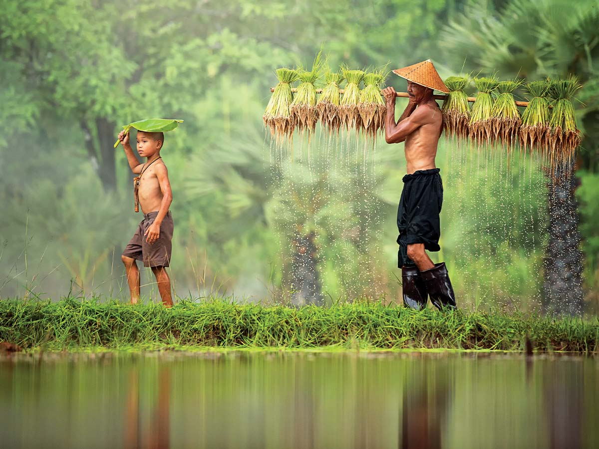 Vietnam father and son rice farmer