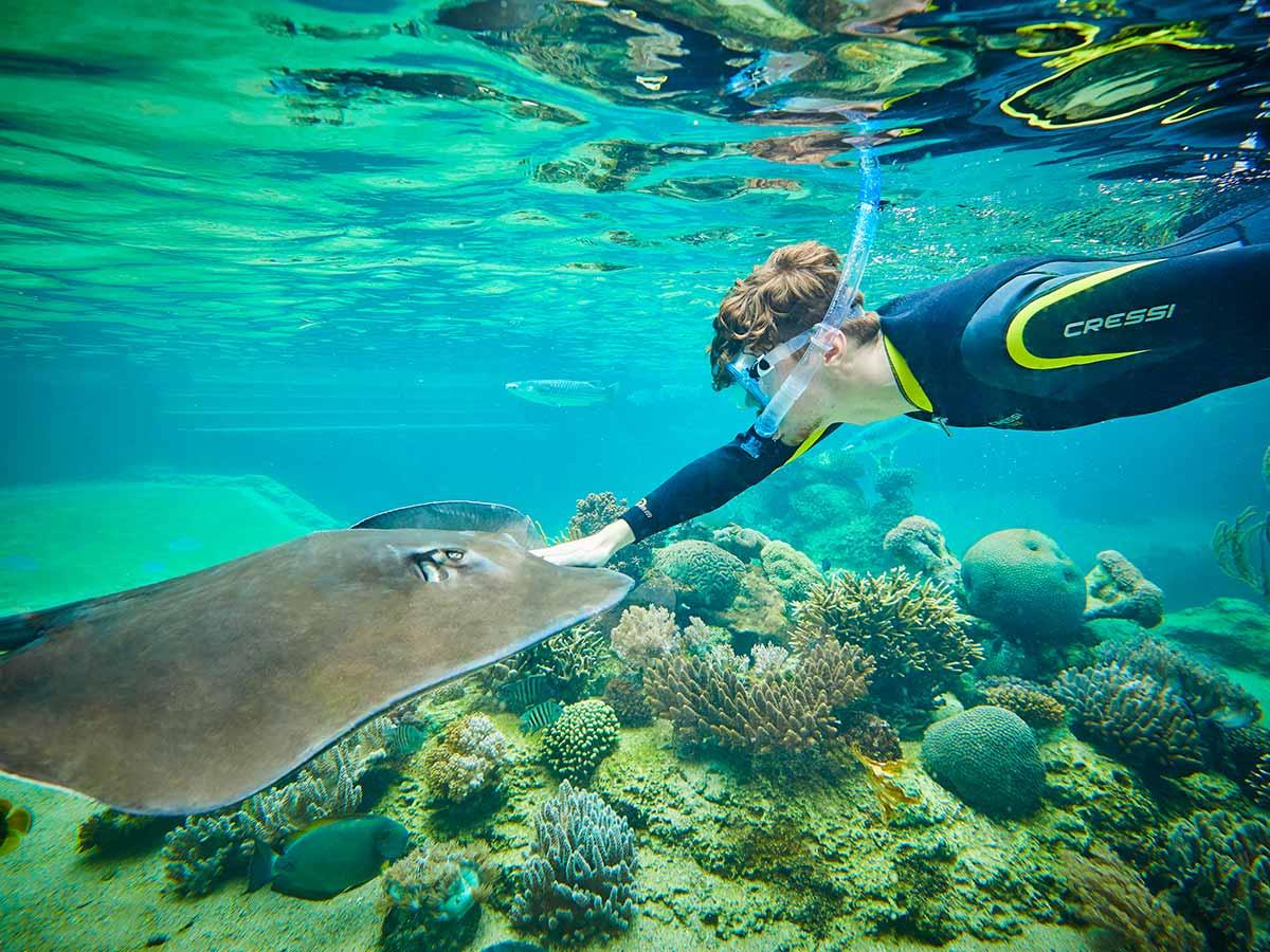 daydream-island-resort-and-spa-snorkelling